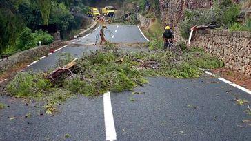 Imágenes del 'cap de fibló': 'El viento no arrancaba los árboles, los partía'