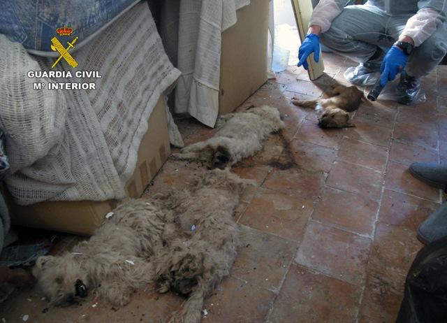 La casa de los horrores: Convivía con un centenar de animales a los que tenía pésimas condiciones