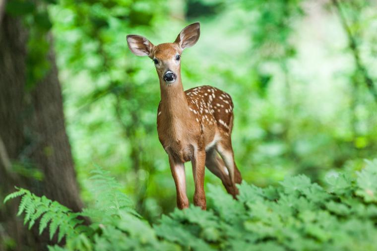 Del kaos al logos (XXIII): Naturaleza, Vida