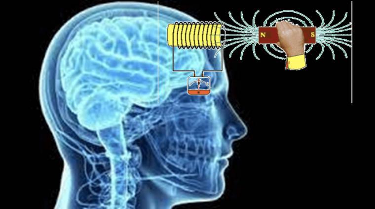¿Controlarán nuestro cerebro a través de la proteína Magneto?